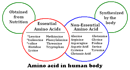 an analysis of the topic of the substances turned into acids Proteins into amino acids fats into fatty acids and glycerol the body uses these basic units to build substances it needs for growth, maintenance, and activity (including other carbohydrates, proteins, and fats.